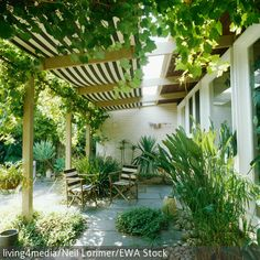 Grün entspannt die Augen und beruhigt. Eine Terrasse mit vielen Grünpflanzen ist also der perfekte Erholungsort nach einem anstrengenden Arbeitstag. Wein, Farn …