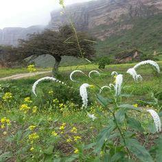 Beautiful Salalh - Oman Salalah, Beautiful Places In The World, Trips, Mountains, Nature, Travel, Viajes, Naturaleza, Traveling