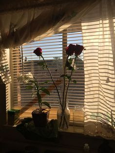 43 ideas flowers aesthetic grunge red for 2019 Templer, Aesthetic Grunge, Light And Shadow, Golden Hour, Aesthetic Pictures, Decoration, Room Inspiration, Travel Inspiration, Fashion Inspiration