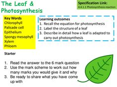 aqa gcse biology coursework photosynthesis This blog is designed to support the learning and revision of students studying aqa gcse biology the syllabus has been separated into 18 bite size chunks to help you navigate your way through the course.