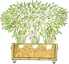 containers for growing bamboo outside | ... the garden. It is the main reason people give for not growing bamboo