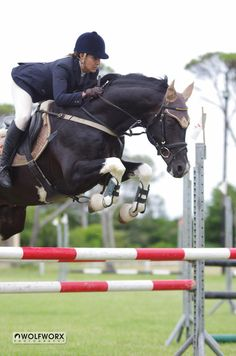 Sir Donnerhit is a Black Tobiano, Imported British Warmblood Stallion Colour Genetics: Hetrozygous Tobiano (50% Tobiano Foal) Homozygous Black - No chance of Chestnut offspring DOB: 06 May 2008...