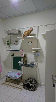 Siberian Forest Cat, Catio, Garage Storage, Future, Bedroom, Pets, Home Decor, Future Tense, Decoration Home