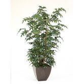 Found it at Wayfair - Fishtail Palm in Planter
