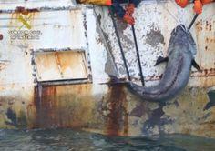 España limpia de piratas la Antártida | NUESTROMAR