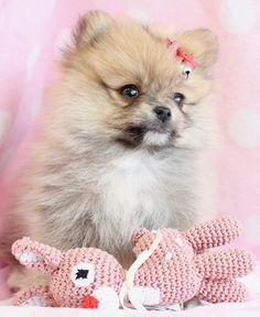 beautiful puppy! :)