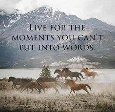 Try to put it into words. Find the most perfect words - one or one thousand - to describe those breathtaking moments. Then you live them three times, and others get to live it too. Great Quotes, Me Quotes, Daily Quotes, Farm Quotes, Qoutes, Inspirational Horse Quotes, Cowboy Quotes, Cowgirl Quote, Rodeo Quotes