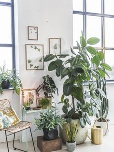 Use old wood stool in garage for planter display inside (plant decor indoor) Interior Tropical, Interior Plants, Interior Design, Decoration Plante, Plants Are Friends, Green Life, Green Plants, Plant Decor, Houseplants
