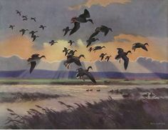 Mallards in a Stormy Sky by Peter Scott Wildlife Paintings, Wildlife Art, Bird Paintings, Hunting Art, Duck Hunting, Duck Pictures, Duck Art, Waterfowl Hunting, Rare Birds