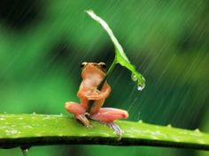 Smart Frog