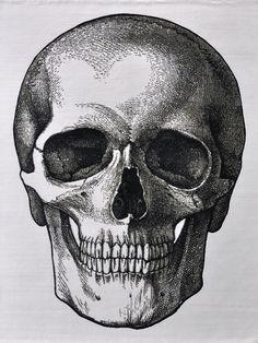 Vintage skull drawing for photo transfer - Art Skull Anatomy, Anatomy Art, Anatomy Drawing, Bone Drawing, Drawing Drawing, Drawing Ideas, Skull Rug, Skull Reference, Skull Sketch