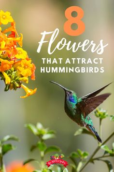 Wondering what flowers hummingbirds love? Plant these hummingbird favorites in your backyard to attract these tiny flyers to your yard or garden! Coral Bells Plant, Coral Bells Heuchera, Best Perennials, Flowers Perennials, Evening Primrose Flower, Flower Garden Design, Flower Gardening, Gardening Tips, Flowers That Attract Hummingbirds