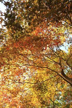2014年、摂理の風景〜月明洞の秋〜