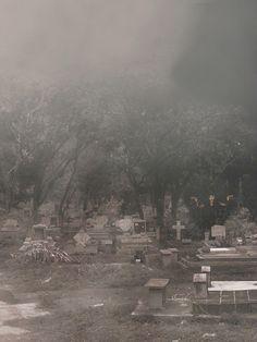 Atrapados por la imagen: Recorriendo los jardines de piedra al amanecer