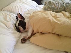 how to get through monday: Don't get out of bed the end.