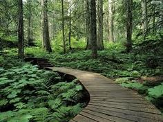 forrest images for decals - Google Search