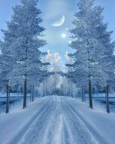 Winter Photography, Nature Photography, Photography Trips, Foto Picture, Beautiful Winter Scenes, Beautiful Winter Pictures, Winter Magic, Winter Photos, Winter Scenery