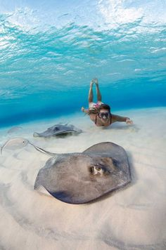 *underwater encounters with stingrays are guaranteed at Stingray City in Grand Cayman Snorkeling, Trinidad E Tobago, Porto Rico, Bahamas, Surfer, Ocean Life, Scuba Diving, Cave Diving, Marine Life