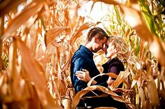 Love this - we have plenty of corn fields around (but will have to wait till next year)