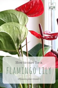 Indoor Vertical Gardening Tips and Ideas Organic gardening isn't always about food to eat. Some people enjoy growing flowers and other forms of plant life as well. Anthurium Care, Lilly Plants, Flamingo Plant, Lily Care, Indoor Gardening Supplies, Planting Flowers, Flowering Plants, Garden Plants, Outdoor Plants