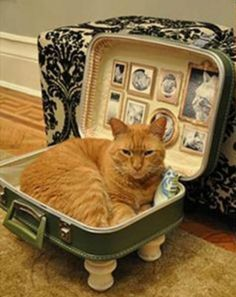 DIY Suitcase Bed -Modern Cat Magazine Want a cozy cat bed? Try this vintage DIY.Tap the link to check out great cat products we have for your little feline friend! Cool Cats, Cool Cat Beds, Beds For Cats, Lit Chat Diy, Diy Cat Bed, Pet Beds Diy, Cat Room, Pet Furniture, Furniture Dolly