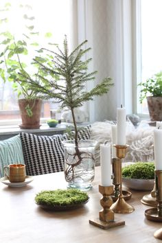 Moss and small tree in vase