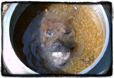 Dog meat soup (bosington) eaten in Korea
