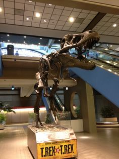 Pittsburg T-Rex