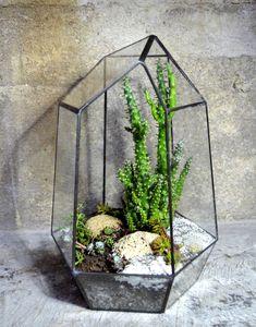 Florarium vysoké černé / Zboží prodejce skloplus | Fler.cz Terrarium, Bring It On, Outdoors, Plants, Home Decor, Dark Around Eyes, Terrariums, Decoration Home, Room Decor