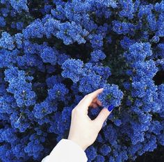 Find images and videos about blue, aesthetic and nature on We Heart It - the app to get lost in what you love. Blue Flowers, Beautiful Flowers, Flowers Pics, Exotic Flowers, Yellow Roses, Pink Roses, Beautiful Images, Everything Is Blue, Aesthetic Colors