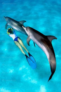 snorkeler and Atlantic spotted dolphins, Stenella frontalis, Little Bahama…