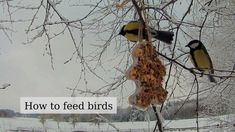 How to feed a birds in winter (nutritious, fat, seed - DIY bird feeder) Winter Diy, Winter Garden, Christmas Villages, Christmas Traditions, Winter Is Comming, Diy Bird Feeder, Big Garden, Horticulture, Best Part Of Me