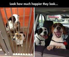 And  nothing makes them happier, than finally having a loving family and a forever home...