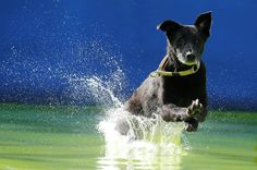 flying-dogs-competition-in-slovenia-06