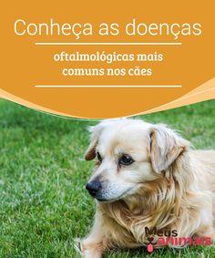 Doenças oftalmológicas em cães conheça as mais comuns Em geral, o #cuidado com os olhos dos #cães é relativamente simples. No entanto, existem #doenças #oftalmológicas em cães que são mais frequentes. É bom que você tenha um pouco de informação à mão, pois é sempre melhor estar atento. #Saúde