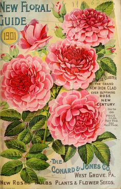 1901 - New floral guide : - Biodiversity Heritage Library. #BHLinbloom