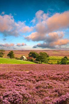 Cottage, North Yorkshire, England