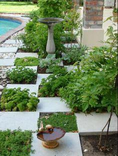 Backyard patio garden