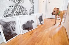 This is my next project.. With a little help from @Terra Chandler of course. :) Going to take big b/w pics of my dog to hang in the house. Gonna be awesome!