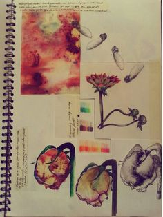Sketchbook - botanic illustration #art - by Jemma Frater