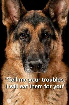 DOGS LOYAL TILL THE END, UNLIKE HUMANS