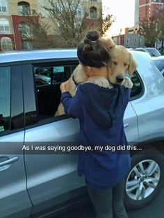 I have a golden retriever so this is like breaking my heart Funny Animal Pictures, Cute Funny Animals, Cute Baby Animals, Funny Dogs, Animals And Pets, Cute Pictures, Dog Pictures, Cute Puppies, Cute Dogs