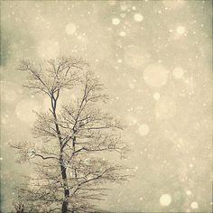 Winter Art: First Snow 8x8 Fine Art Photography, Snow Bokeh Tree Wall Art blue white Nature Wall Art