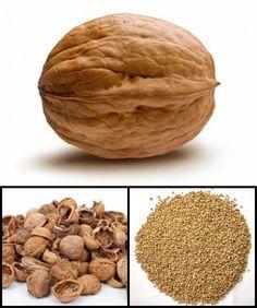 walnutshellmedia.com