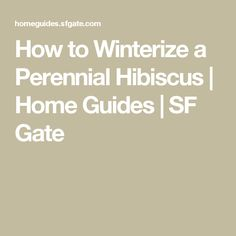 How to Winterize a Perennial Hibiscus | Home Guides | SF Gate