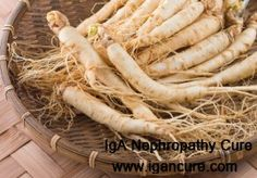 Ginseng is a Chinese herb believed to have medicinal powers. Because of its benefits, Chinese doctors often add it into the treatment. Can IgA Nephropathy patients eat ginseng?