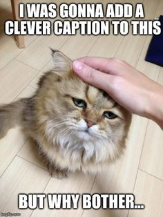 Grumpy Cat, Meet Disappointed Cat