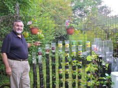 "Vertical soda bottle garden.  ""Bottle tower gardening, a simple and cheap method to produce vegetables in a small space, even on a balcony (Photo WVC)"""