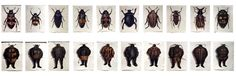 Walter Oltmann: Beetles and Suits (A-J) 2007 South African Art, Gallery, Beetles, Inspiration, Artists, Suits, Figurative, Mixed Media, Paper