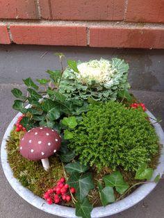 Höst Terrarium, Succulents, Plants, Home Decor, Homemade Home Decor, Terrariums, Flora, Succulent Plants, Plant